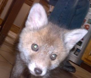 Floxx & fox Img_0812
