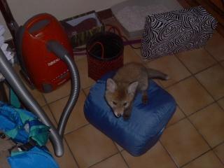 Floxx & fox Img_0813