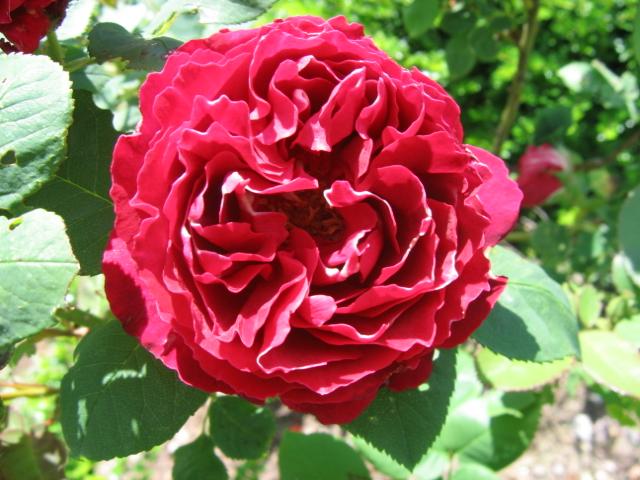 La première floraison Img_4210