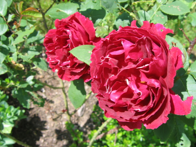 La première floraison Img_4211