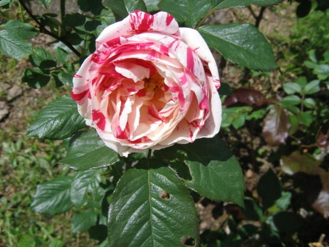 La première floraison Img_4212
