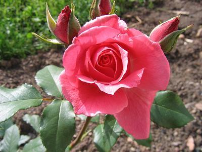 La première floraison Img_4215