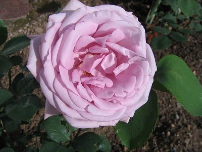 La première floraison Img_4216