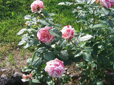 La première floraison Img_4217