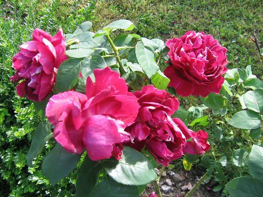 La première floraison Img_4218