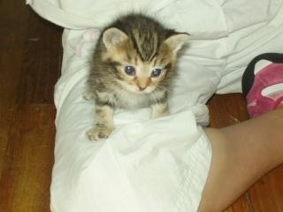 3 chatons (Flip, Grumeau, Chuppa) Cerise10