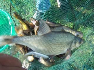 Petit après-midi entre potes (pêche au coup) Peche_33