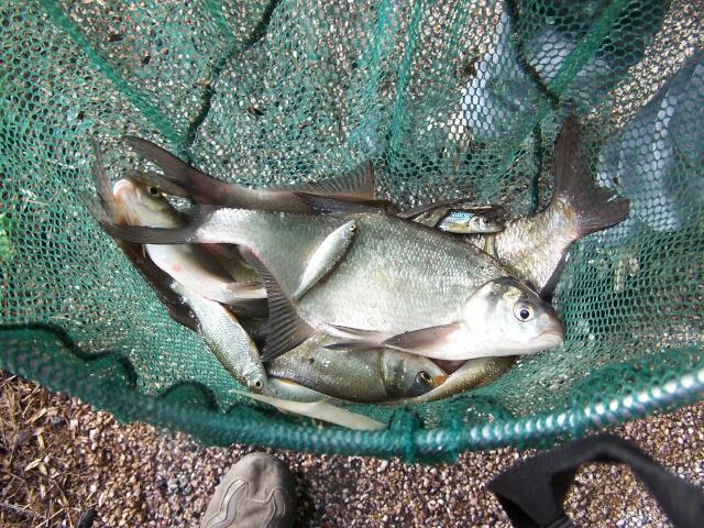 Petite partie de pêche à Rôocourt la Côte du 28/05/2007 Peche_39