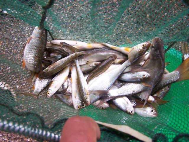 Petite partie de pêche à Rôocourt la Côte du 28/05/2007 Peche_40