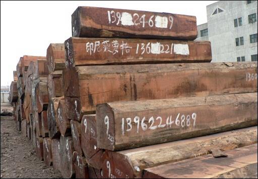 Le Merbau : un bois rare et surexploité Merbau10