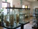 première journée d'études malacologici Pontini Museo_11