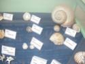 première journée d'études malacologici Pontini Museo_14