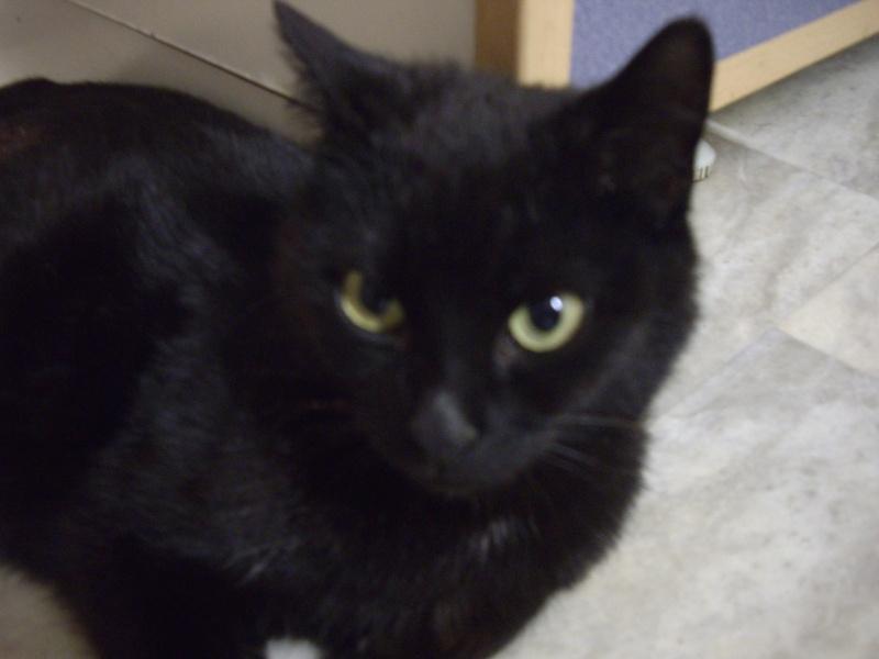 photos de nouveaux nés chats Imgp2210