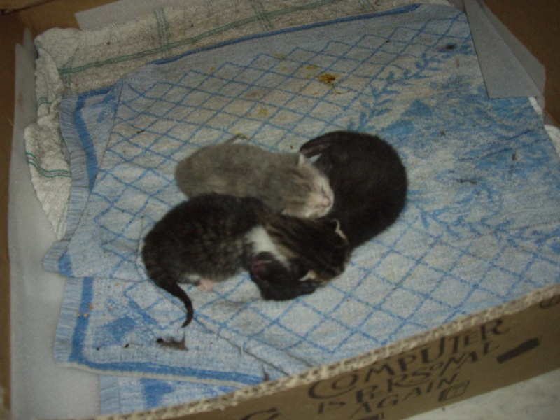 photos de nouveaux nés chats Imgp2211