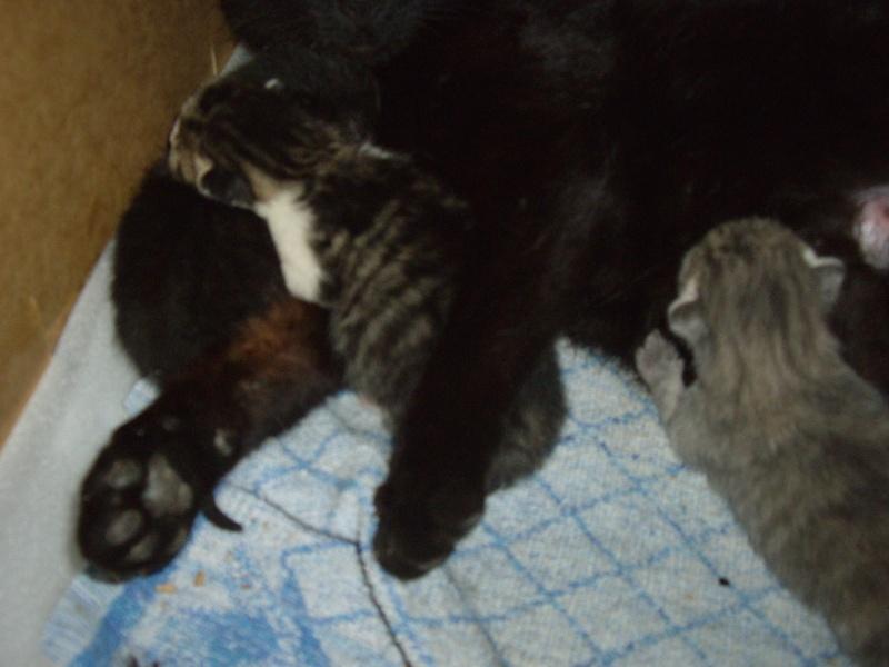 photos de nouveaux nés chats Imgp2212
