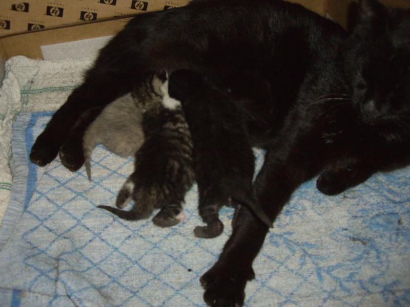 photos de nouveaux nés chats Imgp2214