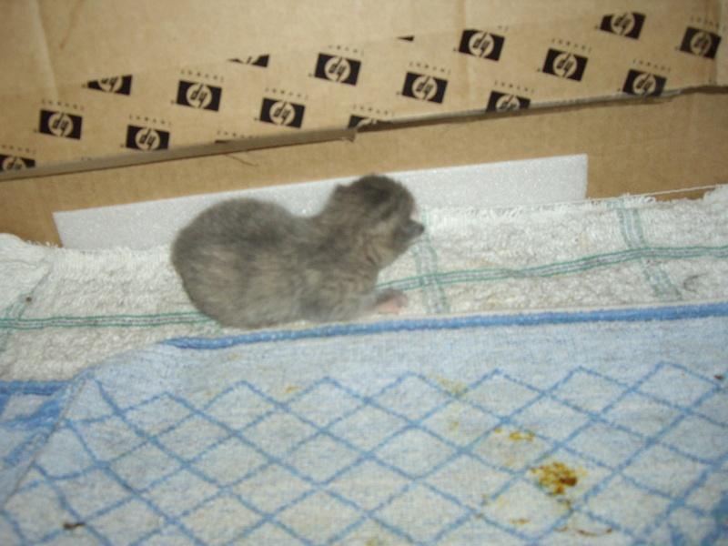 photos de nouveaux nés chats Imgp2215