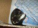 photos de nouveaux nés chats Imgp2216