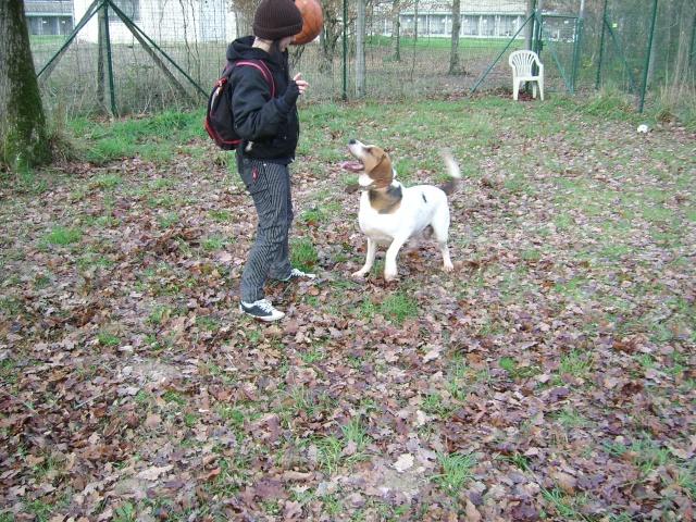 ZEN, croisé beagle mâle, 3 ans (SPA de Luynes-37) Photo_15