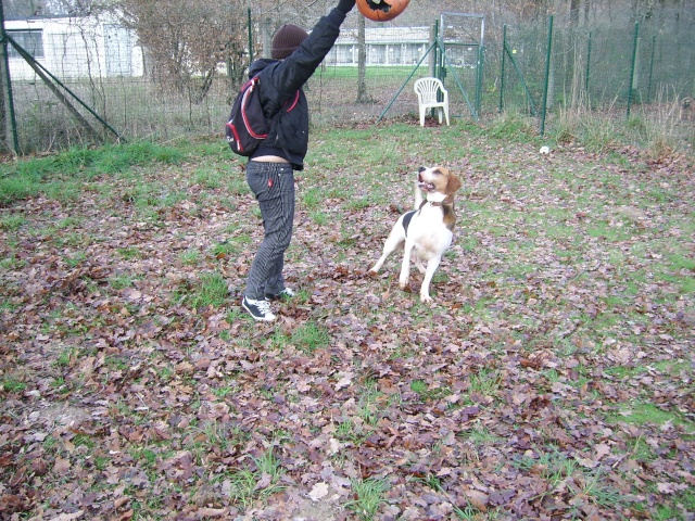 ZEN, croisé beagle mâle, 3 ans (SPA de Luynes-37) Photo_16