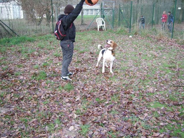 ZEN, croisé beagle mâle, 3 ans (SPA de Luynes-37) Photo_17