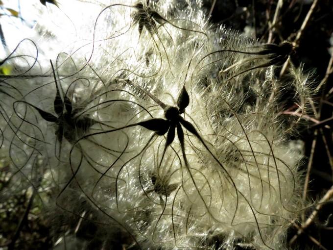 fleurs ou graines ???  Img_0210
