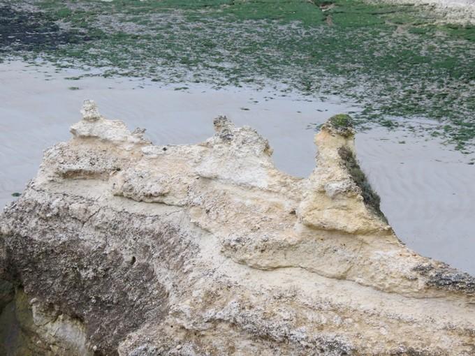 plage de l'arnéche (charente maritime) Img_0515
