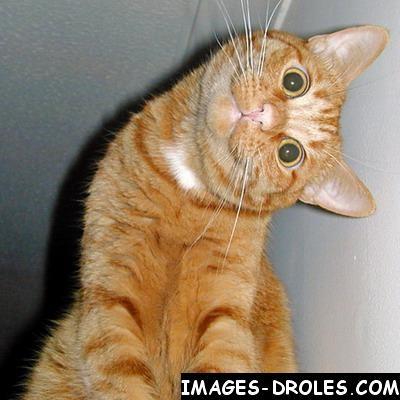 Images humoristiques - Page 4 Chat-m10