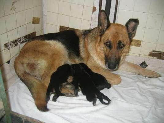 Les bébés Pristina/Folco Photo_14