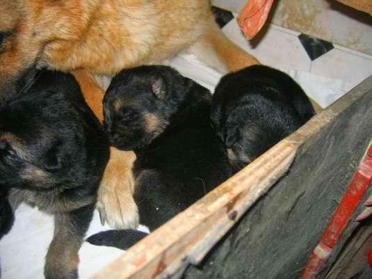 Les bébés Pristina/Folco Photo_20