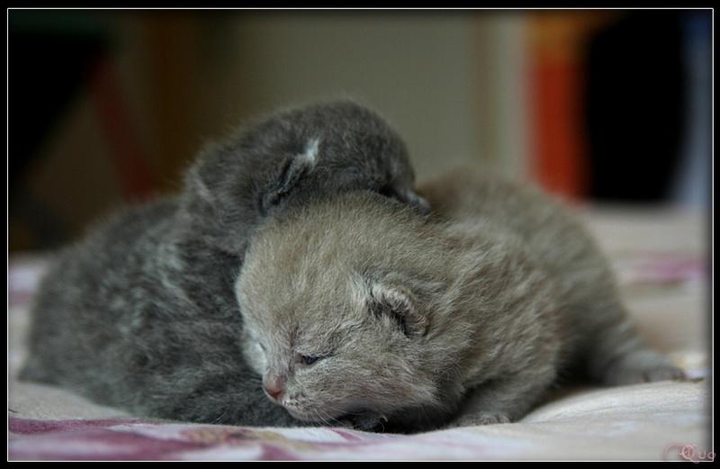 Les petits chatons de mon Aurore Img_6610