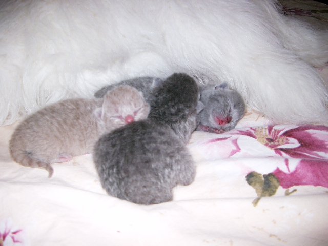 Les petits chatons de mon Aurore Imgp3515