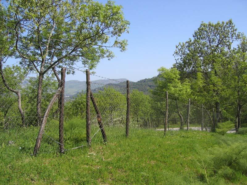 [Italie] Orchidées de Sicile 2007 2_ficu10