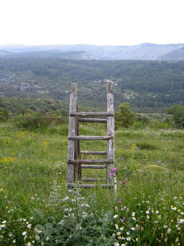 [Italie] Orchidées de Sicile 2007 6_pant10