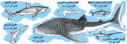أسماك القرش 110