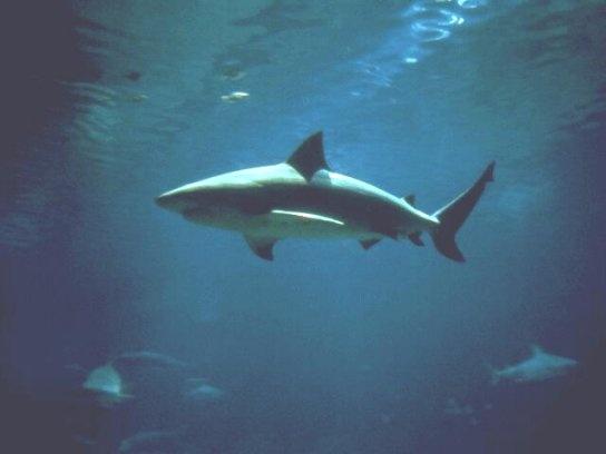 أسماك القرش 2_bmp10