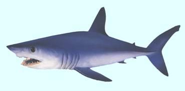أسماك القرش Image010