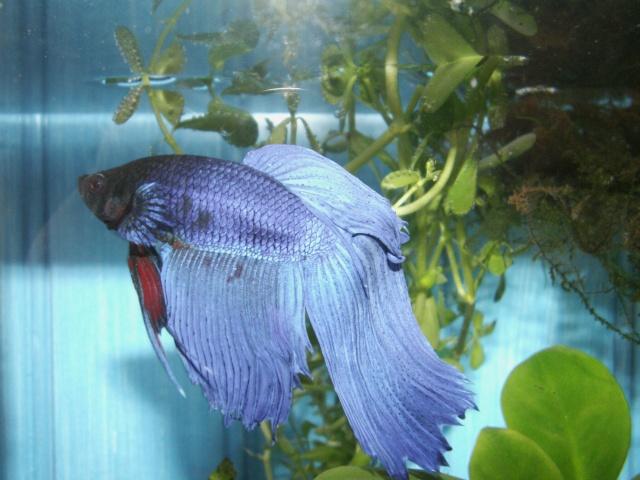 Mon Poisson/pourriture des nageoires et sel Aquari11