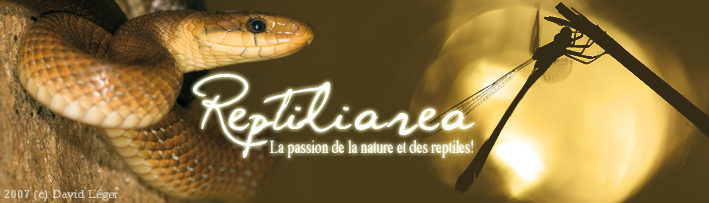 Reptilia-area