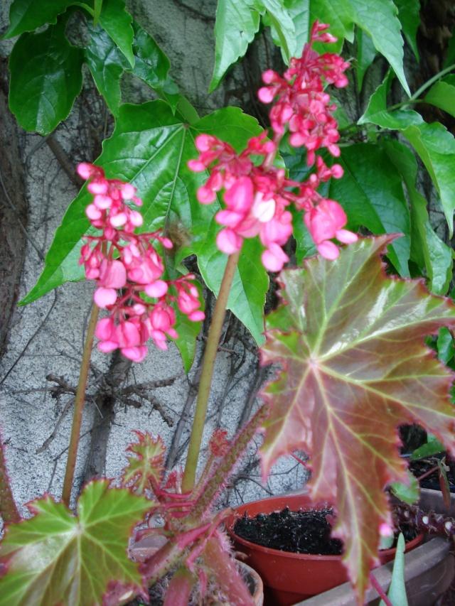 le jardin de Giroflee Jardin18