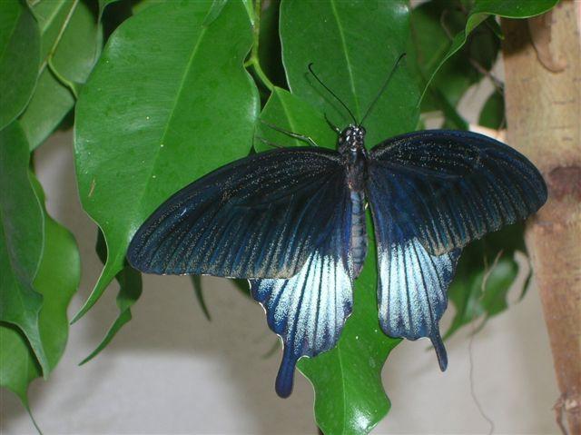 serre aux papillons Orlean12