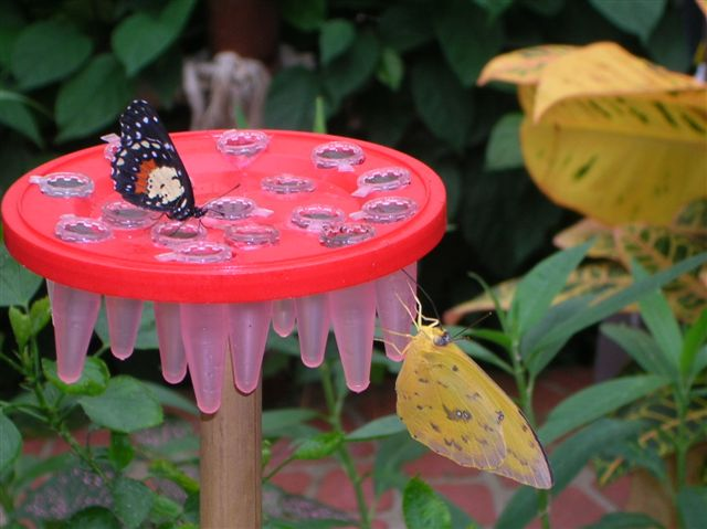 serre aux papillons Orlean13