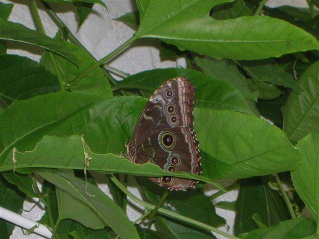 serre aux papillons Orlean14