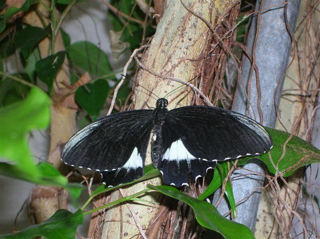 serre aux papillons Orlean15