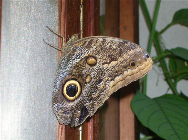 serre aux papillons Orlean16