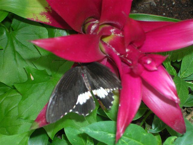 serre aux papillons Orlean17
