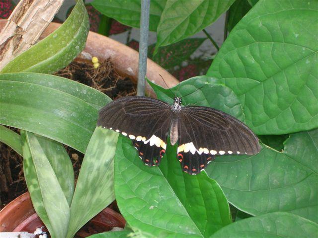 serre aux papillons Orlean18