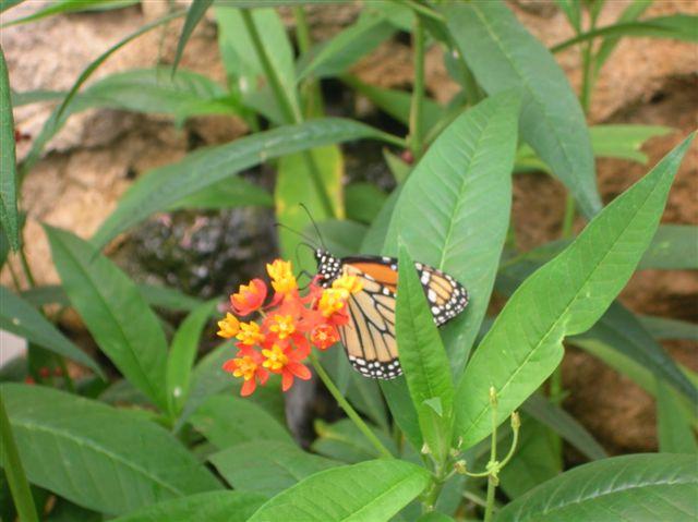 serre aux papillons Orlean20