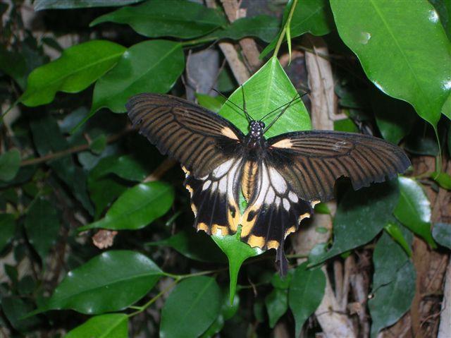 serre aux papillons Orlean21