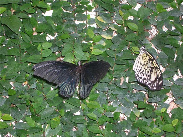 serre aux papillons Orlean22